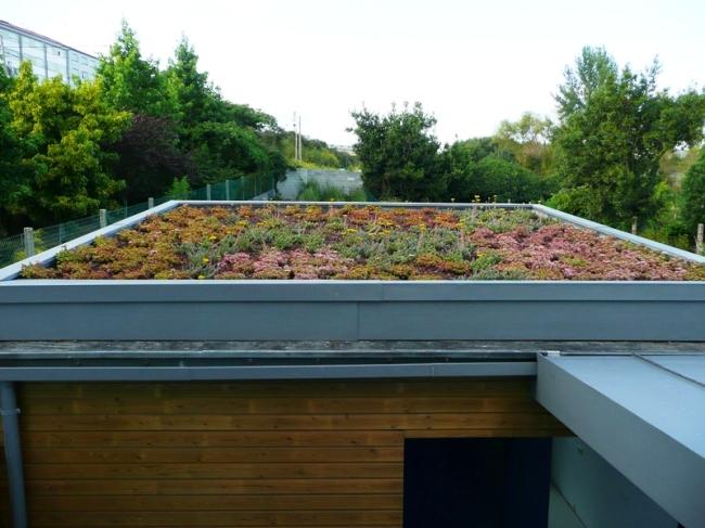 cubierta ecológica en otoño