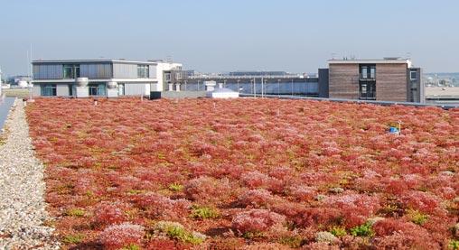 cubierta ecológica colores