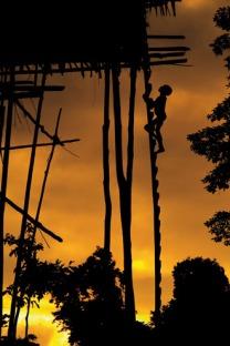 cabañas tribu korowai árboles